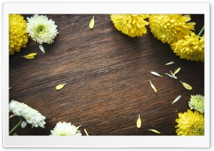 Autumn Mums Flowers Frame, Wood Ultra HD Wallpaper for 4K UHD Widescreen desktop, tablet & smartphone