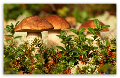 Autumn Mushrooms ❤ 4K UHD Wallpaper for Wide 16:10 5:3 Widescreen WHXGA WQXGA WUXGA WXGA WGA ; 4K UHD 16:9 Ultra High Definition 2160p 1440p 1080p 900p 720p ; Standard 4:3 5:4 3:2 Fullscreen UXGA XGA SVGA QSXGA SXGA DVGA HVGA HQVGA ( Apple PowerBook G4 iPhone 4 3G 3GS iPod Touch ) ; Smartphone 5:3 WGA ; Tablet 1:1 ; iPad 1/2/Mini ; Mobile 4:3 5:3 3:2 16:9 5:4 - UXGA XGA SVGA WGA DVGA HVGA HQVGA ( Apple PowerBook G4 iPhone 4 3G 3GS iPod Touch ) 2160p 1440p 1080p 900p 720p QSXGA SXGA ; Dual 4:3 5:4 UXGA XGA SVGA QSXGA SXGA ;