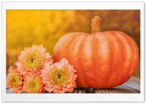 Autumn October Happy Halloween Pumpkin 2019 HD Wide Wallpaper for 4K UHD Widescreen desktop & smartphone