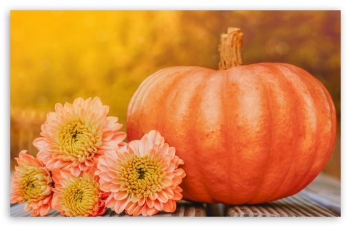 Autumn October Happy Halloween Pumpkin 2019 UltraHD Wallpaper for Wide 16:10 5:3 Widescreen WHXGA WQXGA WUXGA WXGA WGA ; UltraWide 21:9 24:10 ; 8K UHD TV 16:9 Ultra High Definition 2160p 1440p 1080p 900p 720p ; UHD 16:9 2160p 1440p 1080p 900p 720p ; Standard 4:3 3:2 Fullscreen UXGA XGA SVGA DVGA HVGA HQVGA ( Apple PowerBook G4 iPhone 4 3G 3GS iPod Touch ) ; iPad 1/2/Mini ; Mobile 4:3 5:3 3:2 16:9 - UXGA XGA SVGA WGA DVGA HVGA HQVGA ( Apple PowerBook G4 iPhone 4 3G 3GS iPod Touch ) 2160p 1440p 1080p 900p 720p ;