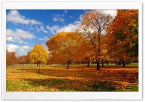 Autumn Park HD Wide Wallpaper for Widescreen