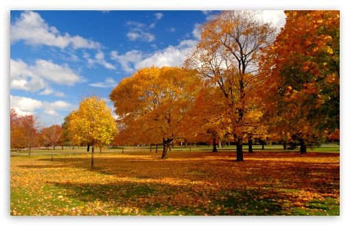 Autumn Park HD wallpaper for Wide 16:10 5:3 Widescreen WHXGA WQXGA WUXGA WXGA WGA ; HD 16:9 High Definition WQHD QWXGA 1080p 900p 720p QHD nHD ; Standard 4:3 5:4 3:2 Fullscreen UXGA XGA SVGA QSXGA SXGA DVGA HVGA HQVGA devices ( Apple PowerBook G4 iPhone 4 3G 3GS iPod Touch ) ; Tablet 1:1 ; iPad 1/2/Mini ; Mobile 4:3 5:3 3:2 16:9 5:4 - UXGA XGA SVGA WGA DVGA HVGA HQVGA devices ( Apple PowerBook G4 iPhone 4 3G 3GS iPod Touch ) WQHD QWXGA 1080p 900p 720p QHD nHD QSXGA SXGA ;