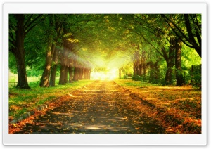 Autumn Path HD Wide Wallpaper for Widescreen