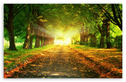 Autumn Path HD wallpaper for Wide 16:10 5:3 Widescreen WHXGA WQXGA WUXGA WXGA WGA ; HD 16:9 High Definition WQHD QWXGA 1080p 900p 720p QHD nHD ; Standard 4:3 5:4 3:2 Fullscreen UXGA XGA SVGA QSXGA SXGA DVGA HVGA HQVGA devices ( Apple PowerBook G4 iPhone 4 3G 3GS iPod Touch ) ; Tablet 1:1 ; iPad 1/2/Mini ; Mobile 4:3 5:3 3:2 16:9 5:4 - UXGA XGA SVGA WGA DVGA HVGA HQVGA devices ( Apple PowerBook G4 iPhone 4 3G 3GS iPod Touch ) WQHD QWXGA 1080p 900p 720p QHD nHD QSXGA SXGA ;
