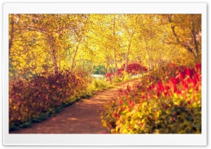 Autumn Pathway HD Wide Wallpaper for Widescreen