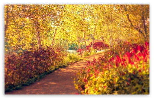 Autumn Pathway HD wallpaper for Wide 16:10 5:3 Widescreen WHXGA WQXGA WUXGA WXGA WGA ; HD 16:9 High Definition WQHD QWXGA 1080p 900p 720p QHD nHD ; Standard 4:3 5:4 3:2 Fullscreen UXGA XGA SVGA QSXGA SXGA DVGA HVGA HQVGA devices ( Apple PowerBook G4 iPhone 4 3G 3GS iPod Touch ) ; Tablet 1:1 ; iPad 1/2/Mini ; Mobile 4:3 5:3 3:2 16:9 5:4 - UXGA XGA SVGA WGA DVGA HVGA HQVGA devices ( Apple PowerBook G4 iPhone 4 3G 3GS iPod Touch ) WQHD QWXGA 1080p 900p 720p QHD nHD QSXGA SXGA ; Dual 16:10 5:3 16:9 4:3 5:4 WHXGA WQXGA WUXGA WXGA WGA WQHD QWXGA 1080p 900p 720p QHD nHD UXGA XGA SVGA QSXGA SXGA ;