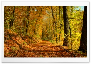 Autumn Promenade HD Wide Wallpaper for Widescreen
