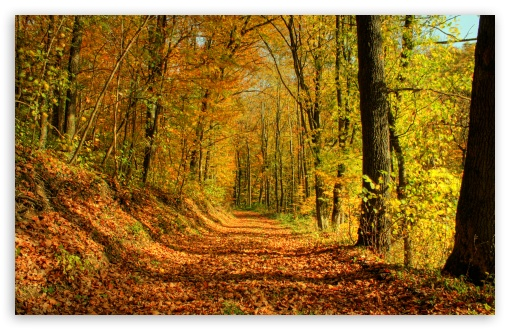 Autumn Promenade HD wallpaper for Wide 16:10 5:3 Widescreen WHXGA WQXGA WUXGA WXGA WGA ; HD 16:9 High Definition WQHD QWXGA 1080p 900p 720p QHD nHD ; Standard 4:3 5:4 3:2 Fullscreen UXGA XGA SVGA QSXGA SXGA DVGA HVGA HQVGA devices ( Apple PowerBook G4 iPhone 4 3G 3GS iPod Touch ) ; Tablet 1:1 ; iPad 1/2/Mini ; Mobile 4:3 5:3 3:2 16:9 5:4 - UXGA XGA SVGA WGA DVGA HVGA HQVGA devices ( Apple PowerBook G4 iPhone 4 3G 3GS iPod Touch ) WQHD QWXGA 1080p 900p 720p QHD nHD QSXGA SXGA ;