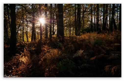 Autumn Rays ❤ 4K UHD Wallpaper for Wide 16:10 5:3 Widescreen WHXGA WQXGA WUXGA WXGA WGA ; 4K UHD 16:9 Ultra High Definition 2160p 1440p 1080p 900p 720p ; UHD 16:9 2160p 1440p 1080p 900p 720p ; Standard 4:3 5:4 3:2 Fullscreen UXGA XGA SVGA QSXGA SXGA DVGA HVGA HQVGA ( Apple PowerBook G4 iPhone 4 3G 3GS iPod Touch ) ; Smartphone 5:3 WGA ; Tablet 1:1 ; iPad 1/2/Mini ; Mobile 4:3 5:3 3:2 16:9 5:4 - UXGA XGA SVGA WGA DVGA HVGA HQVGA ( Apple PowerBook G4 iPhone 4 3G 3GS iPod Touch ) 2160p 1440p 1080p 900p 720p QSXGA SXGA ;