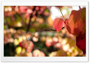 Autumn Red Leaves HD Wide Wallpaper for Widescreen