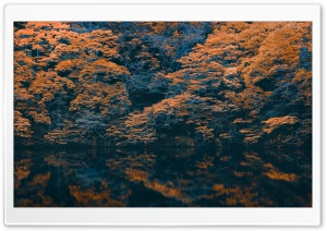 Autumn Reflection HD Wide Wallpaper for Widescreen