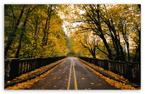 Autumn Road HD wallpaper for Wide 16:10 5:3 Widescreen WHXGA WQXGA WUXGA WXGA WGA ; HD 16:9 High Definition WQHD QWXGA 1080p 900p 720p QHD nHD ; Standard 4:3 5:4 3:2 Fullscreen UXGA XGA SVGA QSXGA SXGA DVGA HVGA HQVGA devices ( Apple PowerBook G4 iPhone 4 3G 3GS iPod Touch ) ; Tablet 1:1 ; iPad 1/2/Mini ; Mobile 4:3 5:3 3:2 16:9 5:4 - UXGA XGA SVGA WGA DVGA HVGA HQVGA devices ( Apple PowerBook G4 iPhone 4 3G 3GS iPod Touch ) WQHD QWXGA 1080p 900p 720p QHD nHD QSXGA SXGA ;
