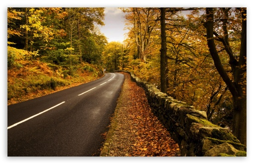 Autumn Road HD wallpaper for Wide 16:10 5:3 Widescreen WHXGA WQXGA WUXGA WXGA WGA ; HD 16:9 High Definition WQHD QWXGA 1080p 900p 720p QHD nHD ; UHD 16:9 WQHD QWXGA 1080p 900p 720p QHD nHD ; Standard 4:3 5:4 3:2 Fullscreen UXGA XGA SVGA QSXGA SXGA DVGA HVGA HQVGA devices ( Apple PowerBook G4 iPhone 4 3G 3GS iPod Touch ) ; Tablet 1:1 ; iPad 1/2/Mini ; Mobile 4:3 5:3 3:2 16:9 5:4 - UXGA XGA SVGA WGA DVGA HVGA HQVGA devices ( Apple PowerBook G4 iPhone 4 3G 3GS iPod Touch ) WQHD QWXGA 1080p 900p 720p QHD nHD QSXGA SXGA ; Dual 16:10 5:3 16:9 4:3 5:4 WHXGA WQXGA WUXGA WXGA WGA WQHD QWXGA 1080p 900p 720p QHD nHD UXGA XGA SVGA QSXGA SXGA ;