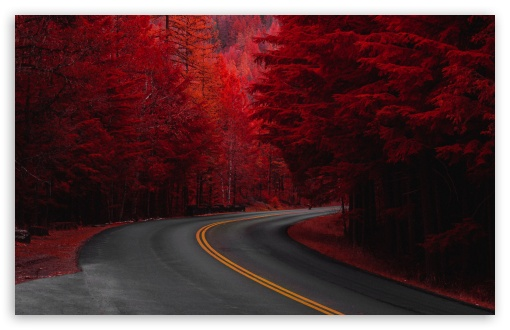 Autumn Road Aesthetic Ultra Hd Desktop Background Wallpaper For Multi Display Dual Monitor Tablet Smartphone