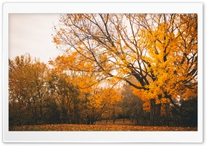 Autumn Scenery HD Wide Wallpaper for Widescreen