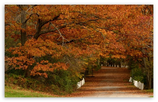 Autumn Scenes 19 ❤ 4K UHD Wallpaper for Wide 16:10 5:3 Widescreen WHXGA WQXGA WUXGA WXGA WGA ; 4K UHD 16:9 Ultra High Definition 2160p 1440p 1080p 900p 720p ; Standard 4:3 5:4 3:2 Fullscreen UXGA XGA SVGA QSXGA SXGA DVGA HVGA HQVGA ( Apple PowerBook G4 iPhone 4 3G 3GS iPod Touch ) ; Tablet 1:1 ; iPad 1/2/Mini ; Mobile 4:3 5:3 3:2 16:9 5:4 - UXGA XGA SVGA WGA DVGA HVGA HQVGA ( Apple PowerBook G4 iPhone 4 3G 3GS iPod Touch ) 2160p 1440p 1080p 900p 720p QSXGA SXGA ;