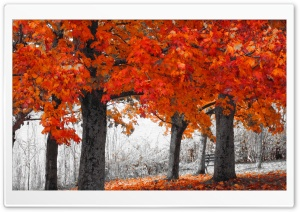 Autumn Series HD Wide Wallpaper for Widescreen