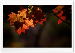 Autumn Shades HD Wide Wallpaper for Widescreen