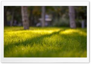 Autumn Sun Ultra HD Wallpaper for 4K UHD Widescreen desktop, tablet & smartphone