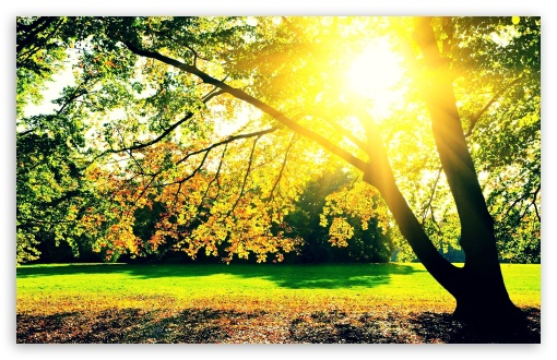Autumn Sunrise HD wallpaper for Standard 4:3 5:4 Fullscreen UXGA XGA SVGA QSXGA SXGA ; Wide 16:10 5:3 Widescreen WHXGA WQXGA WUXGA WXGA WGA ; HD 16:9 High Definition WQHD QWXGA 1080p 900p 720p QHD nHD ; Other 3:2 DVGA HVGA HQVGA devices ( Apple PowerBook G4 iPhone 4 3G 3GS iPod Touch ) ; Mobile VGA WVGA iPhone iPad PSP Phone - VGA QVGA Smartphone ( PocketPC GPS iPod Zune BlackBerry HTC Samsung LG Nokia Eten Asus ) WVGA WQVGA Smartphone ( HTC Samsung Sony Ericsson LG Vertu MIO ) HVGA Smartphone ( Apple iPhone iPod BlackBerry HTC Samsung Nokia ) Sony PSP Zune HD Zen ; Tablet 2 ;