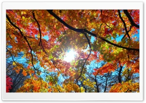 Autumn Sunshine HD Wide Wallpaper for Widescreen