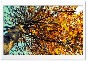 Autumn Tree HD Wide Wallpaper for Widescreen