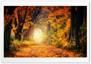 Autumn Tree Tunnel HD Wide Wallpaper for 4K UHD Widescreen desktop & smartphone