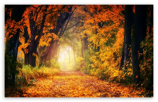 Autumn Tree Tunnel UltraHD Wallpaper for Wide 16:10 5:3 Widescreen WHXGA WQXGA WUXGA WXGA WGA ; UltraWide 21:9 24:10 ; 8K UHD TV 16:9 Ultra High Definition 2160p 1440p 1080p 900p 720p ; UHD 16:9 2160p 1440p 1080p 900p 720p ; Standard 4:3 5:4 3:2 Fullscreen UXGA XGA SVGA QSXGA SXGA DVGA HVGA HQVGA ( Apple PowerBook G4 iPhone 4 3G 3GS iPod Touch ) ; Smartphone 16:9 3:2 5:3 2160p 1440p 1080p 900p 720p DVGA HVGA HQVGA ( Apple PowerBook G4 iPhone 4 3G 3GS iPod Touch ) WGA ; Tablet 1:1 ; iPad 1/2/Mini ; Mobile 4:3 5:3 3:2 16:9 5:4 - UXGA XGA SVGA WGA DVGA HVGA HQVGA ( Apple PowerBook G4 iPhone 4 3G 3GS iPod Touch ) 2160p 1440p 1080p 900p 720p QSXGA SXGA ; Dual 16:10 5:3 4:3 5:4 3:2 WHXGA WQXGA WUXGA WXGA WGA UXGA XGA SVGA QSXGA SXGA DVGA HVGA HQVGA ( Apple PowerBook G4 iPhone 4 3G 3GS iPod Touch ) ;