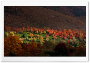 Autumn Trees HD Wide Wallpaper for Widescreen
