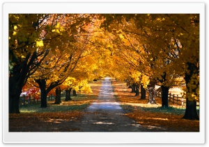 Autumn Trees Along The Road HD Wide Wallpaper for Widescreen
