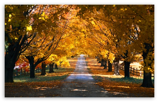 Autumn Trees Along The Road HD wallpaper for Wide 16:10 5:3 Widescreen WHXGA WQXGA WUXGA WXGA WGA ; HD 16:9 High Definition WQHD QWXGA 1080p 900p 720p QHD nHD ; Standard 4:3 5:4 Fullscreen UXGA XGA SVGA QSXGA SXGA ; MS 3:2 DVGA HVGA HQVGA devices ( Apple PowerBook G4 iPhone 4 3G 3GS iPod Touch ) ; Mobile VGA WVGA iPhone iPad PSP Phone - VGA QVGA Smartphone ( PocketPC GPS iPod Zune BlackBerry HTC Samsung LG Nokia Eten Asus ) WVGA WQVGA Smartphone ( HTC Samsung Sony Ericsson LG Vertu MIO ) HVGA Smartphone ( Apple iPhone iPod BlackBerry HTC Samsung Nokia ) Sony PSP Zune HD Zen ; Tablet 1&2 Android ; Dual 5:4 QSXGA SXGA ;