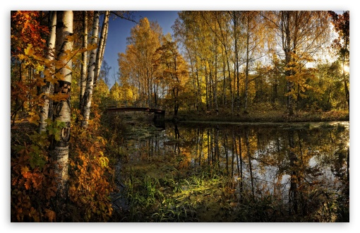 Autumn Trees And Their Reflection In The Water HD wallpaper for Wide 16:10 5:3 Widescreen WHXGA WQXGA WUXGA WXGA WGA ; HD 16:9 High Definition WQHD QWXGA 1080p 900p 720p QHD nHD ; Standard 4:3 5:4 3:2 Fullscreen UXGA XGA SVGA QSXGA SXGA DVGA HVGA HQVGA devices ( Apple PowerBook G4 iPhone 4 3G 3GS iPod Touch ) ; Tablet 1:1 ; iPad 1/2/Mini ; Mobile 4:3 5:3 3:2 16:9 5:4 - UXGA XGA SVGA WGA DVGA HVGA HQVGA devices ( Apple PowerBook G4 iPhone 4 3G 3GS iPod Touch ) WQHD QWXGA 1080p 900p 720p QHD nHD QSXGA SXGA ;