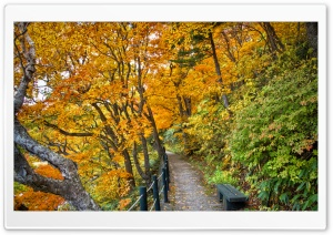 Autumn Walk HD Wide Wallpaper for Widescreen