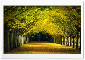 Autumn Walk Ultra HD Wallpaper for 4K UHD Widescreen desktop, tablet & smartphone