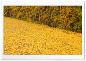 Autumn Wind HD Wide Wallpaper for Widescreen