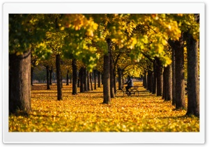 Autumn, Yellow, Foliage, Bike Ride, Trees, Nature Ultra HD Wallpaper for 4K UHD Widescreen desktop, tablet & smartphone