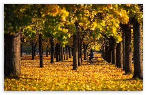 Autumn, Yellow, Foliage, Bike Ride, Trees, Nature UltraHD Wallpaper for Wide 16:10 5:3 Widescreen WHXGA WQXGA WUXGA WXGA WGA ; UltraWide 21:9 24:10 ; 8K UHD TV 16:9 Ultra High Definition 2160p 1440p 1080p 900p 720p ; UHD 16:9 2160p 1440p 1080p 900p 720p ; Standard 4:3 5:4 3:2 Fullscreen UXGA XGA SVGA QSXGA SXGA DVGA HVGA HQVGA ( Apple PowerBook G4 iPhone 4 3G 3GS iPod Touch ) ; Smartphone 16:9 3:2 5:3 2160p 1440p 1080p 900p 720p DVGA HVGA HQVGA ( Apple PowerBook G4 iPhone 4 3G 3GS iPod Touch ) WGA ; Tablet 1:1 ; iPad 1/2/Mini ; Mobile 4:3 5:3 3:2 16:9 5:4 - UXGA XGA SVGA WGA DVGA HVGA HQVGA ( Apple PowerBook G4 iPhone 4 3G 3GS iPod Touch ) 2160p 1440p 1080p 900p 720p QSXGA SXGA ;