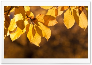Autumn Yellow Leaves HD Wide Wallpaper for Widescreen