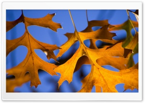 Autumn Yellow Leaves And Blue Sky HD Wide Wallpaper for Widescreen