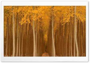 Autumn Yellow Trees Ultra HD Wallpaper for 4K UHD Widescreen desktop, tablet & smartphone