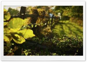 Autumnal Light Ultra HD Wallpaper for 4K UHD Widescreen desktop, tablet & smartphone