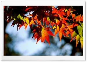 Autumnal Tints HD Wide Wallpaper for Widescreen