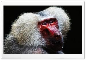 Baboon Ultra HD Wallpaper for 4K UHD Widescreen desktop, tablet & smartphone