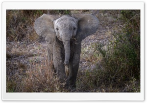 Baby African Elephant HD Wide Wallpaper for 4K UHD Widescreen desktop & smartphone