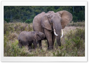 Baby and Mother Elephant, Africa HD Wide Wallpaper for 4K UHD Widescreen desktop & smartphone