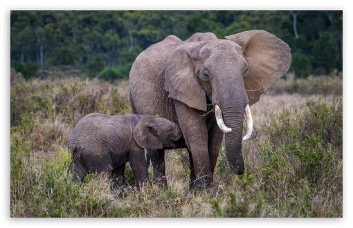 Baby and Mother Elephant, Africa ❤ 4K UHD Wallpaper for Wide 16:10 5:3 Widescreen WHXGA WQXGA WUXGA WXGA WGA ; UltraWide 21:9 24:10 ; 4K UHD 16:9 Ultra High Definition 2160p 1440p 1080p 900p 720p ; UHD 16:9 2160p 1440p 1080p 900p 720p ; Standard 4:3 5:4 3:2 Fullscreen UXGA XGA SVGA QSXGA SXGA DVGA HVGA HQVGA ( Apple PowerBook G4 iPhone 4 3G 3GS iPod Touch ) ; Smartphone 3:2 DVGA HVGA HQVGA ( Apple PowerBook G4 iPhone 4 3G 3GS iPod Touch ) ; Tablet 1:1 ; iPad 1/2/Mini ; Mobile 4:3 5:3 3:2 16:9 5:4 - UXGA XGA SVGA WGA DVGA HVGA HQVGA ( Apple PowerBook G4 iPhone 4 3G 3GS iPod Touch ) 2160p 1440p 1080p 900p 720p QSXGA SXGA ;