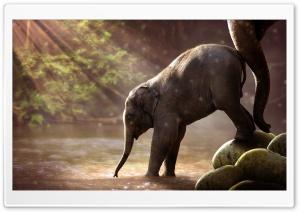 Baby Elephant Drinking Water HD Wide Wallpaper for 4K UHD Widescreen desktop & smartphone