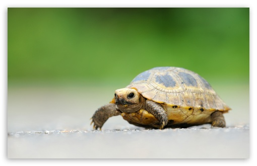 Baby Elongated Tortoise ❤ 4K UHD Wallpaper for Wide 16:10 5:3 Widescreen WHXGA WQXGA WUXGA WXGA WGA ; 4K UHD 16:9 Ultra High Definition 2160p 1440p 1080p 900p 720p ; Standard 4:3 5:4 3:2 Fullscreen UXGA XGA SVGA QSXGA SXGA DVGA HVGA HQVGA ( Apple PowerBook G4 iPhone 4 3G 3GS iPod Touch ) ; Tablet 1:1 ; iPad 1/2/Mini ; Mobile 4:3 5:3 3:2 16:9 5:4 - UXGA XGA SVGA WGA DVGA HVGA HQVGA ( Apple PowerBook G4 iPhone 4 3G 3GS iPod Touch ) 2160p 1440p 1080p 900p 720p QSXGA SXGA ;