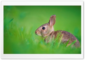Baby Hare Ultra HD Wallpaper for 4K UHD Widescreen desktop, tablet & smartphone