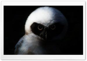 Baby Owl, Night Ultra HD Wallpaper for 4K UHD Widescreen desktop, tablet & smartphone